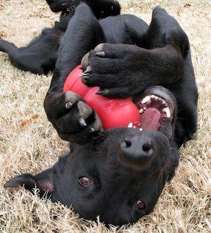 dog-and-kong-by-oakleyoriginals-33-percent
