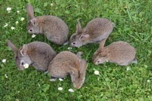 rabbits-2140440_1920