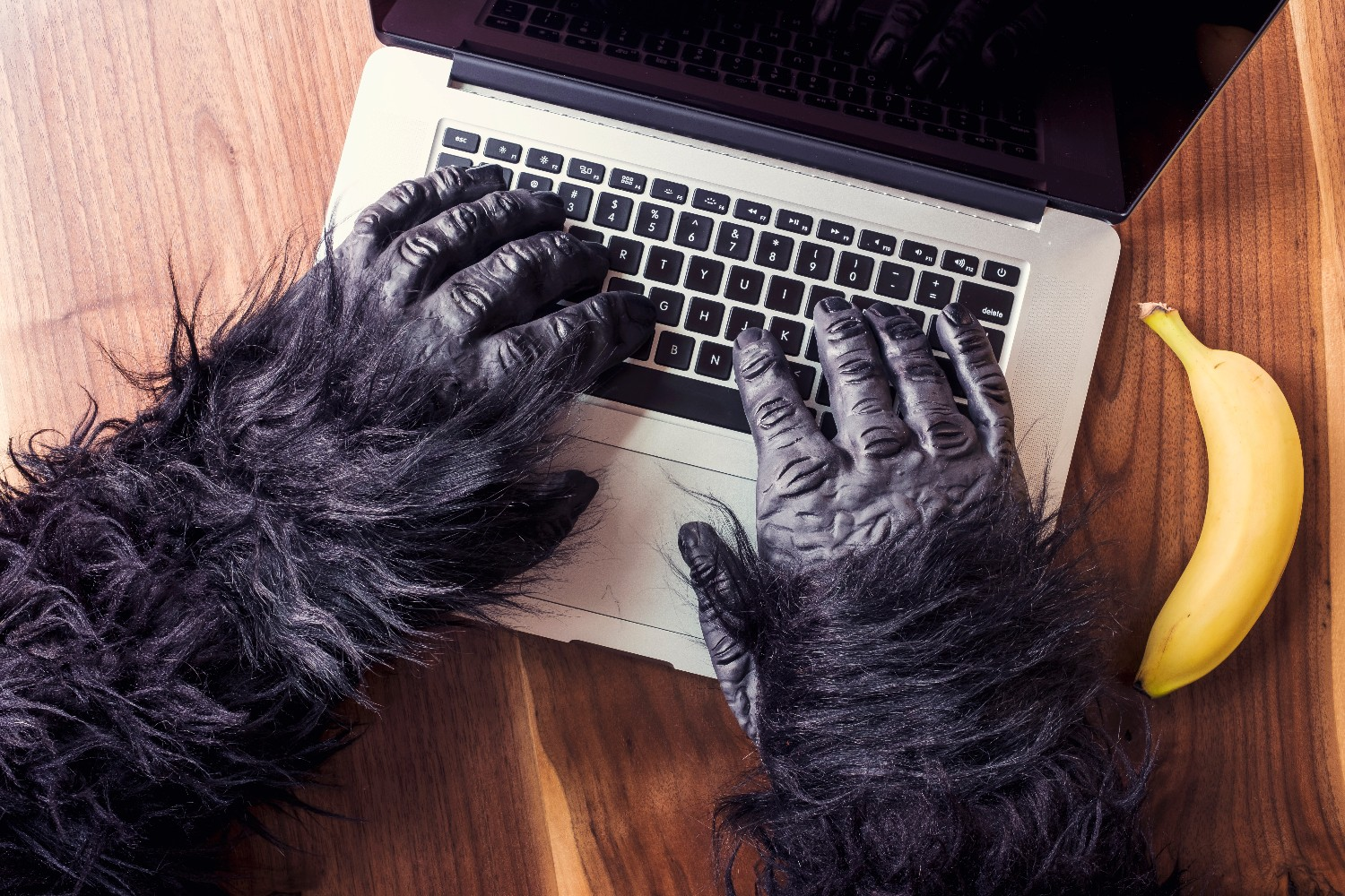 gorilla hands on keyboard virtual assistant - Edited