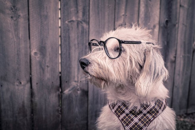 gratisography dog with glasses as mentor