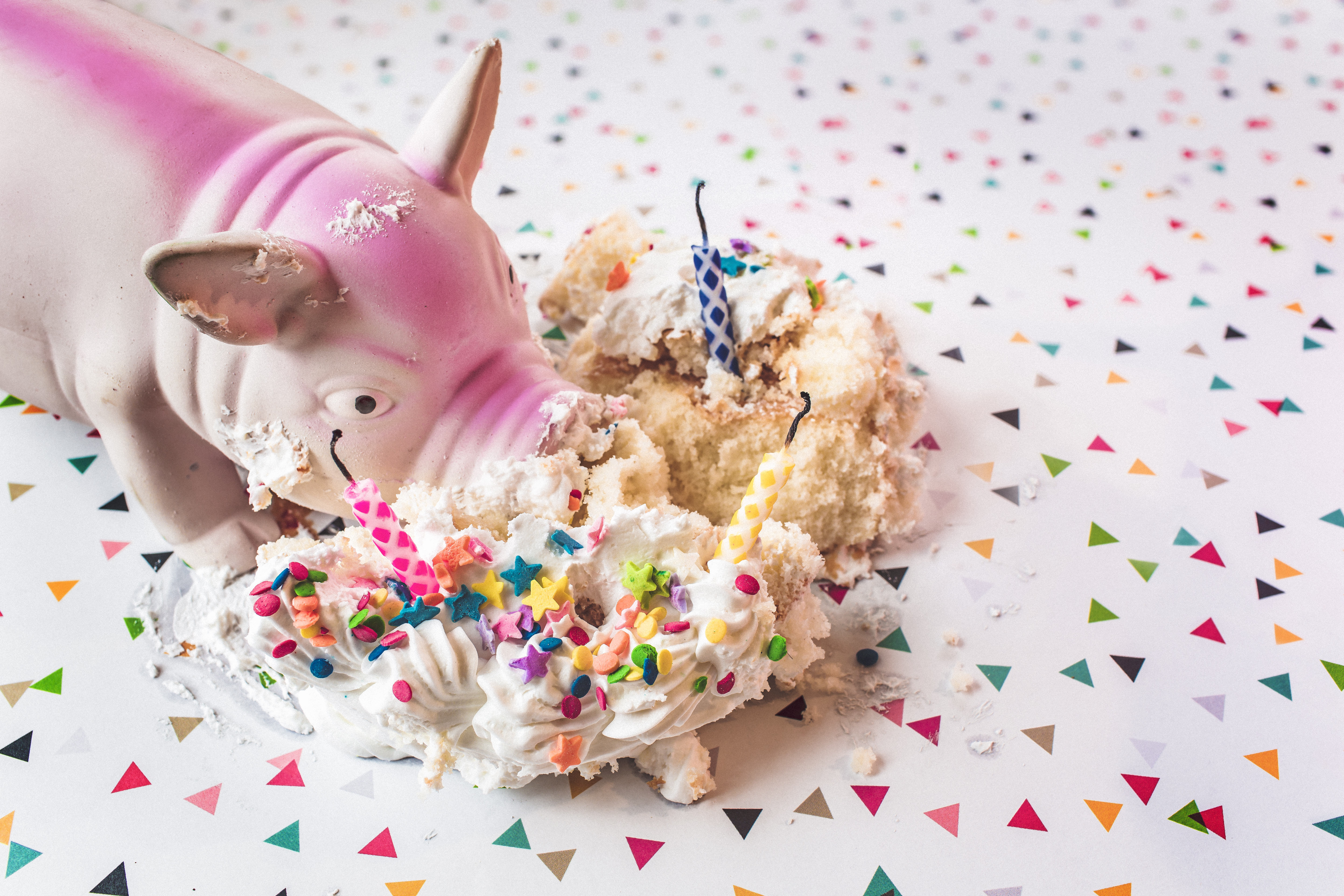 gratisography-pig and binging on cake celebrate your successes