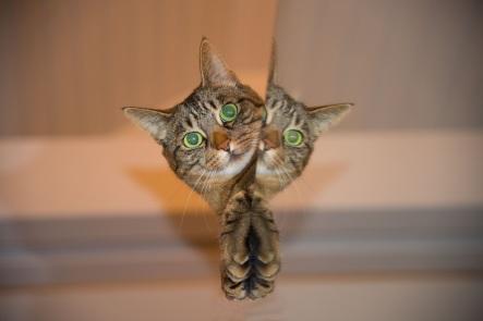 cat-pet-mirror right brain left brain reduced