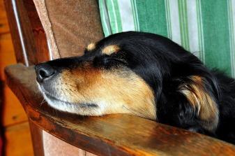 dog-1601041_1280