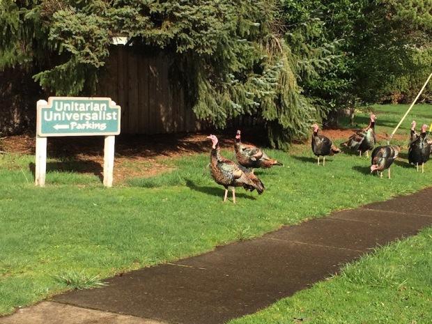unitarian turkeys