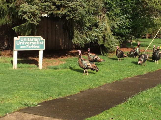 unitarian turkeys