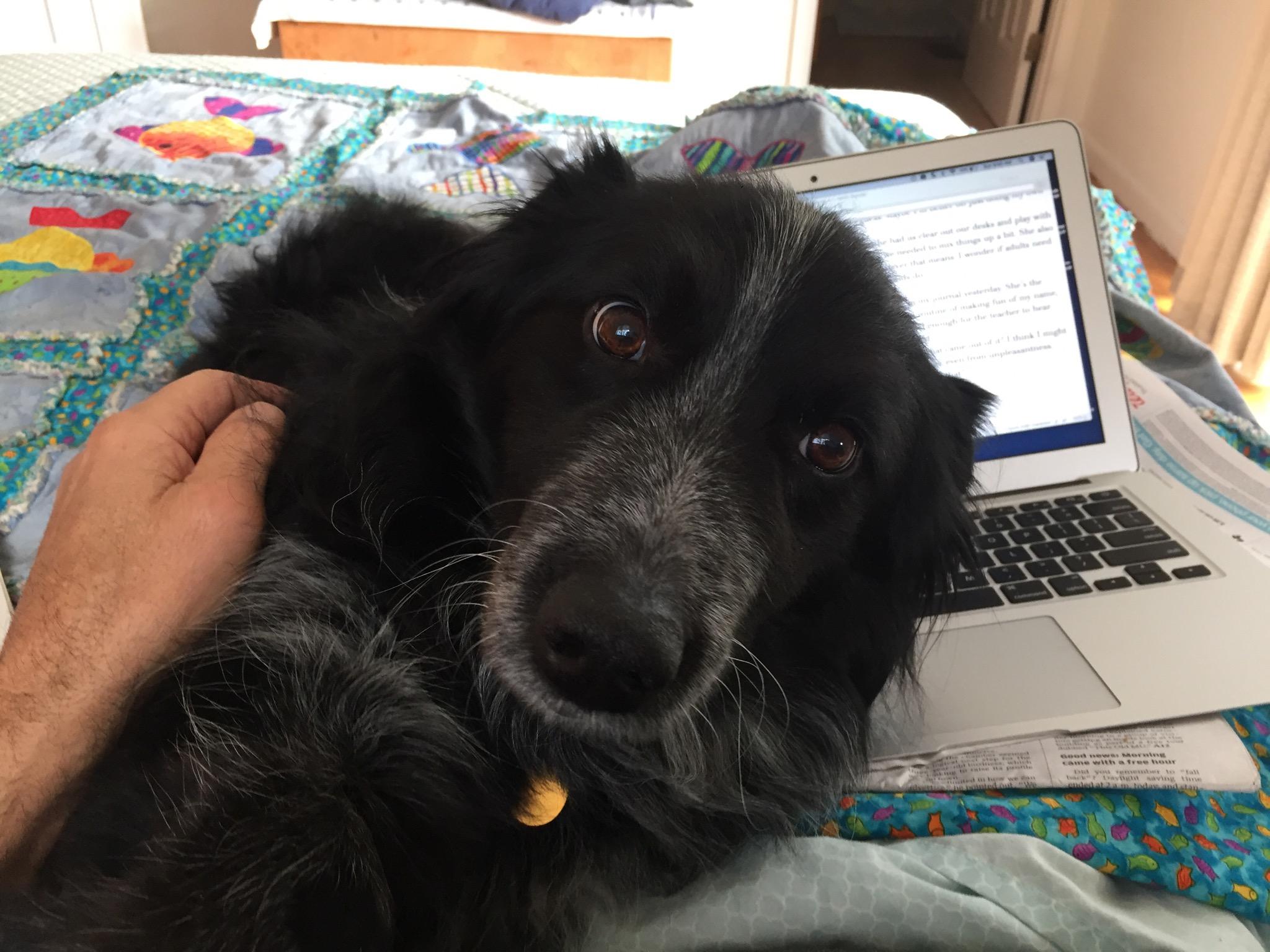 black dog leaning against laptop keyboard