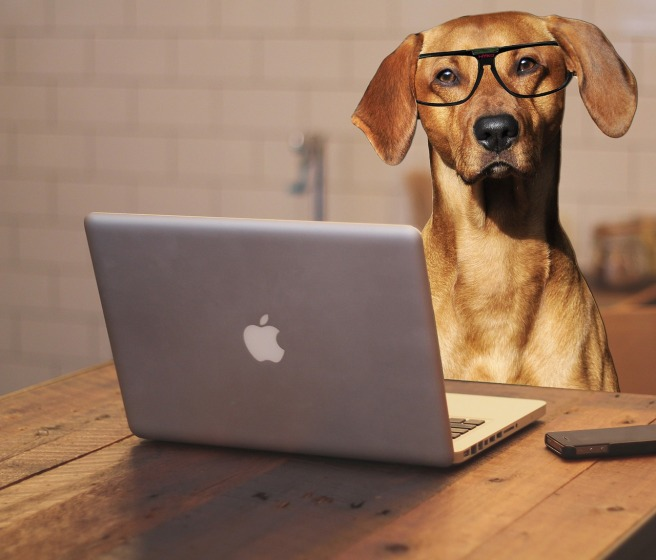 dog wearing glasses; dog sitting in front of a laptop