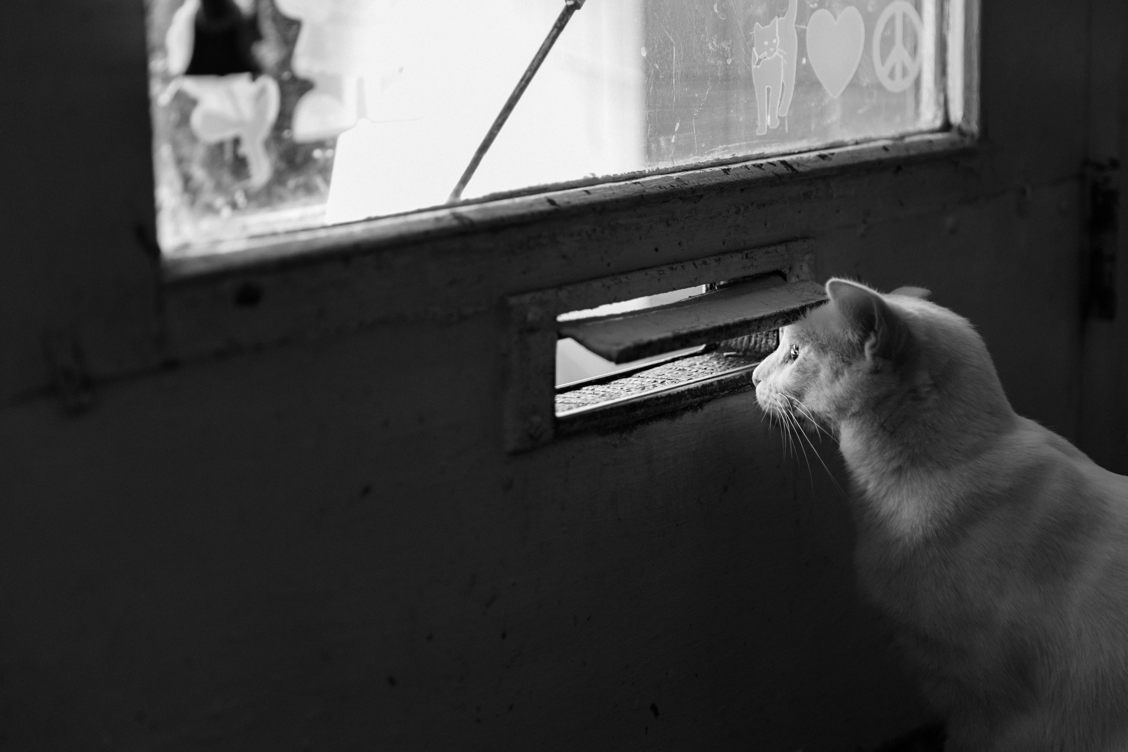 Cat looking through mail slot