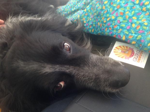 dog with chin resting on iPad mini