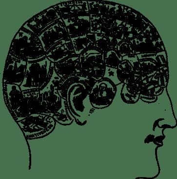 brain and its traits