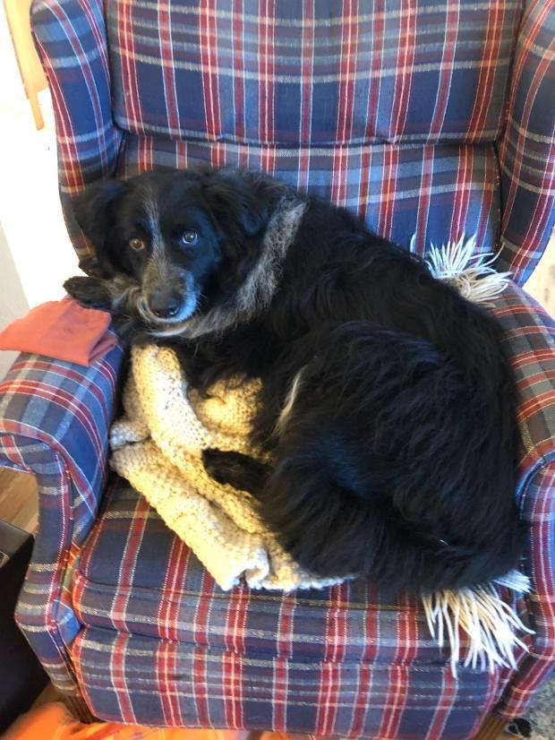 Buddy in plaid chair reducedjpeg