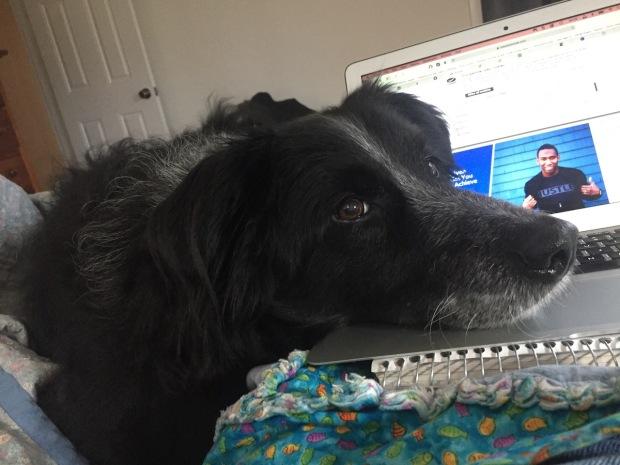 buddy-on-keyboard